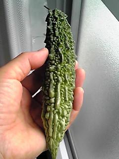 今年の初収穫