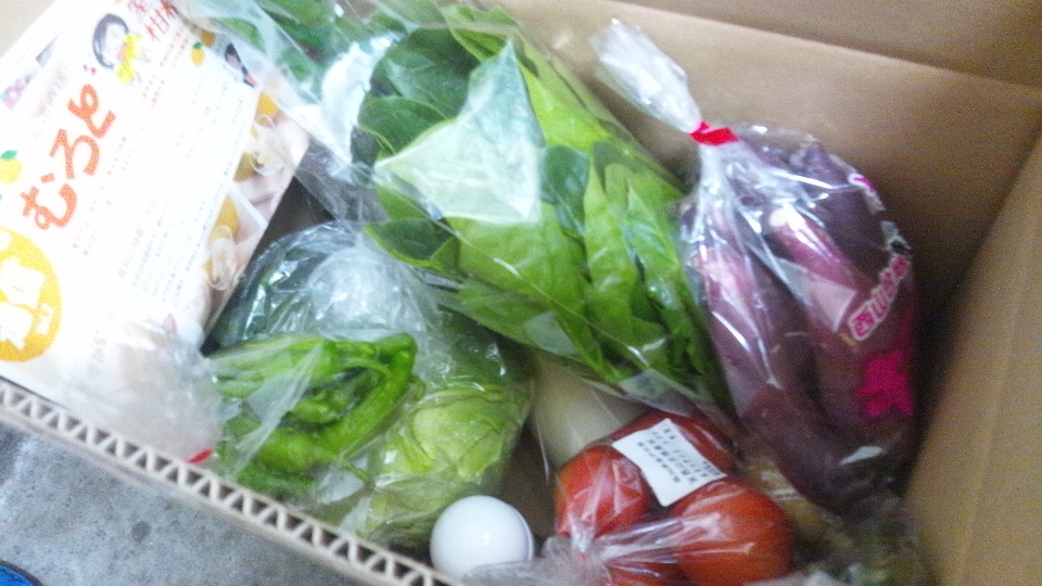 再び室戸の野菜