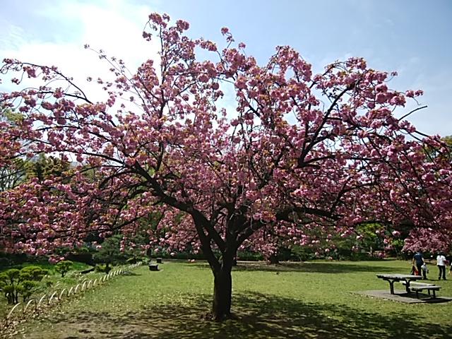 清澄庭園の関山